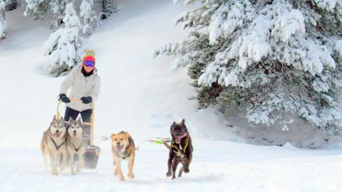 trineos-con-perros-baqueira-montgarri